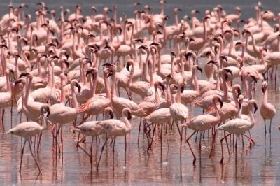 tanzania reizen lake natron natronmeer flamingo individuele rondreis afrika atuu travel