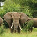 olifant atuu travel rondreis Afrika Botswana Namibia Zuid-Afrika Uganda Malawi Zambia Mozambique Zimbabwe