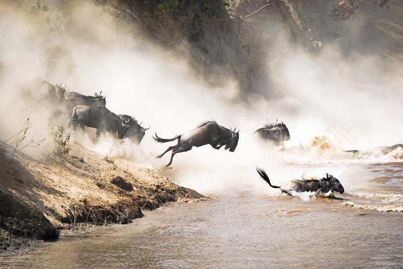 Kenia kenya Maasai Mara Masai atju travel grote trek wildebeest gnoe