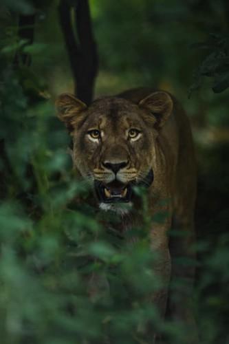 Malawi leeuw Wesley Hartmann atuu travel rondreis Majete Liwonde