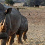 neushoorn eswatini atuu travel reizen op maat rondreis Afrika