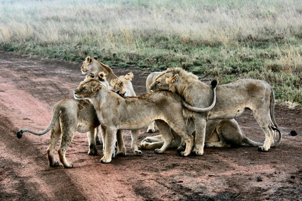 atuu travel tanzania safari selous ruaha mikumi udzungwa serengeti ngorongoro