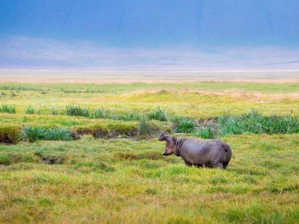 atuu travel duurzaam reizen Travelife reisspecialist afrika azie Latijns Amerika