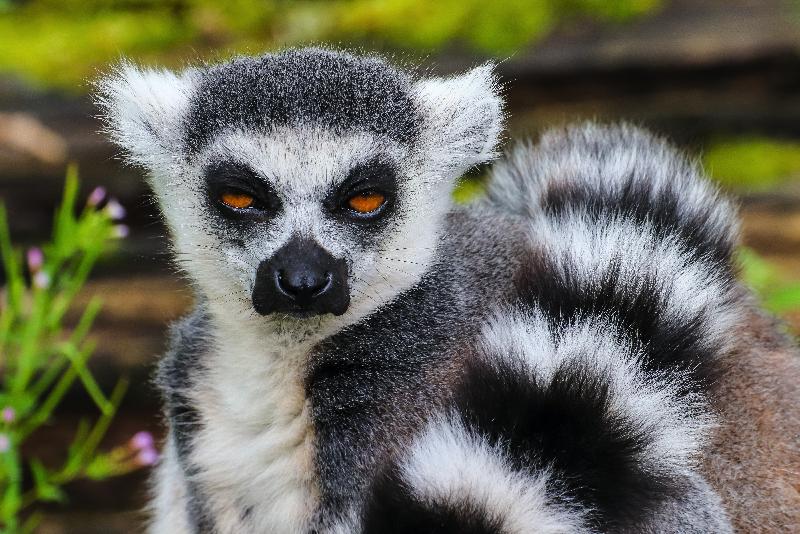 atuu travel duurzaam reizen dierenwelzijn rondreis reizen vakantie safari afrika madagascar madagaskar
