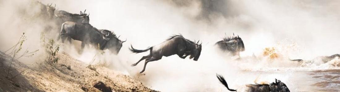 Vijf redenen waarom de Maasai Mara op jouw bucket list hoort