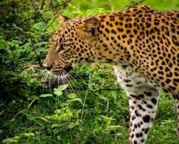 Sri Lanka: de beste safaribestemming buiten Afrika