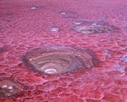 Het rode Natronmeer: zeker doen tijdens een rondreis Tanzania